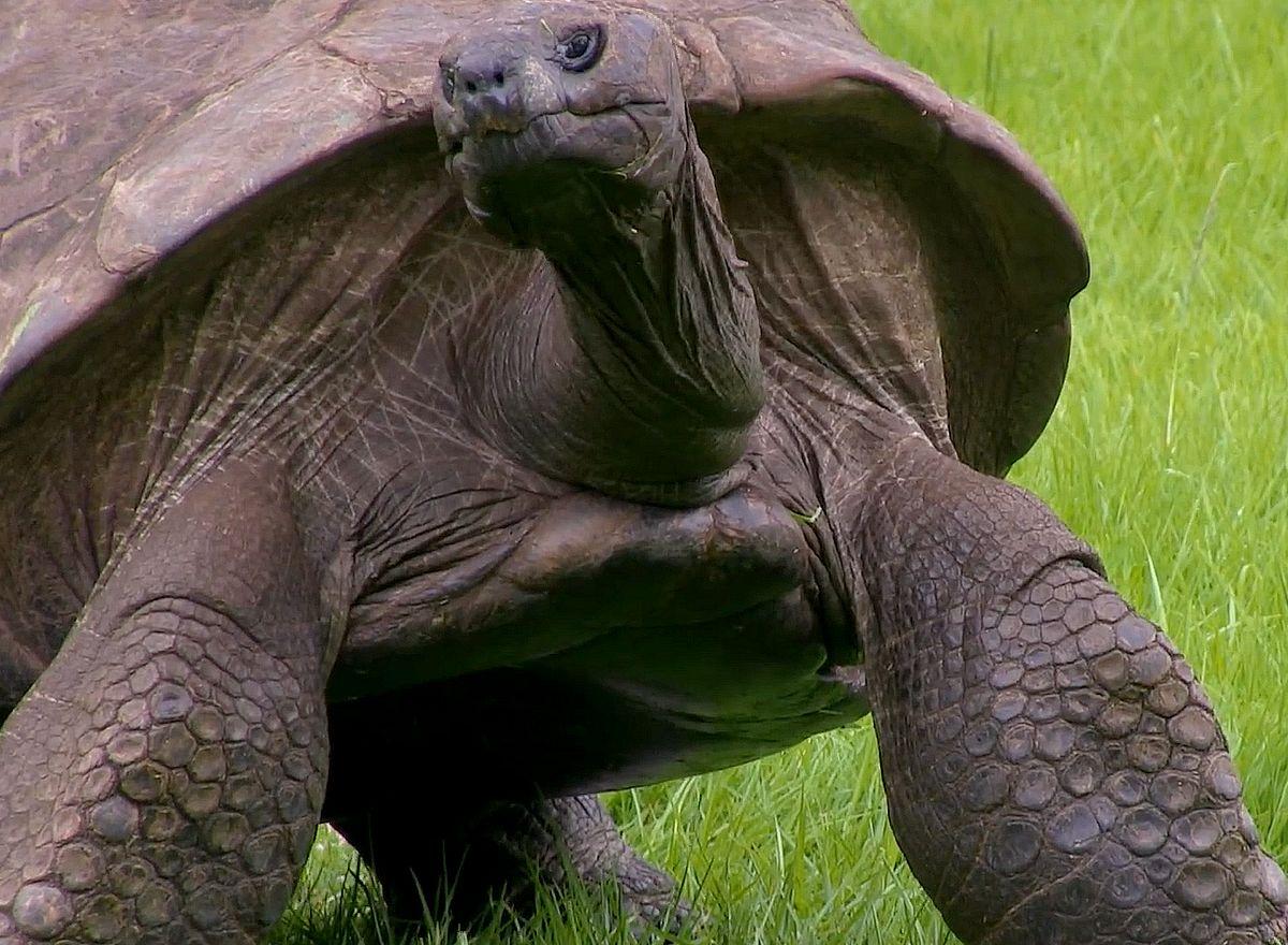 Et sinon, la plus vieille bête sur Terre est une tortue gay