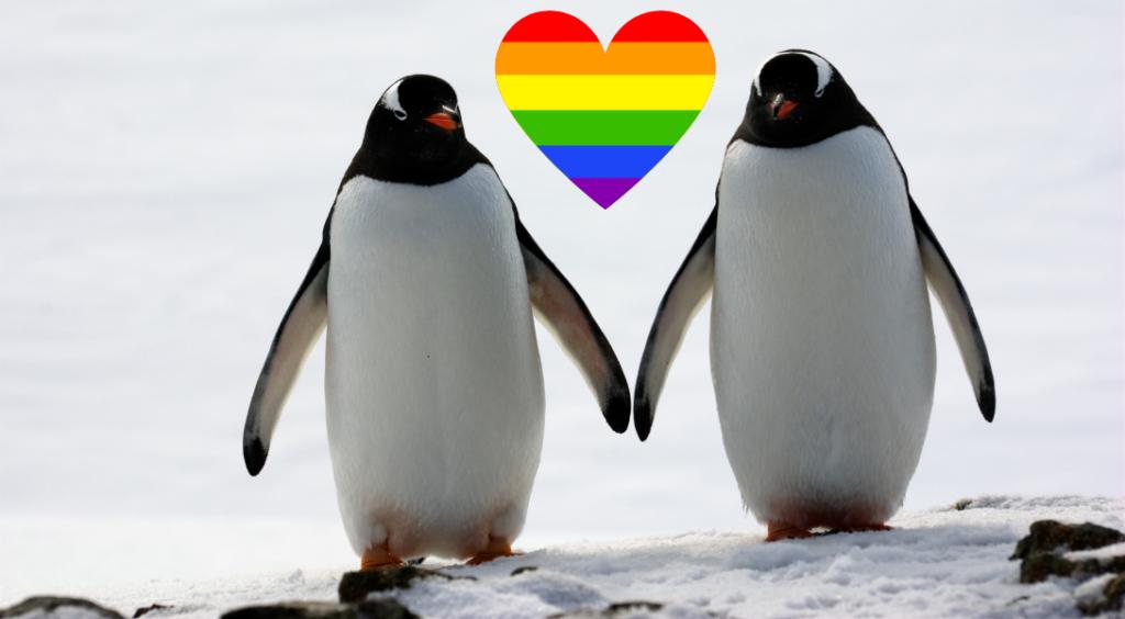 manchots papous homosexualité animaux